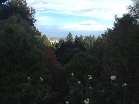 20121105_portland-rose-garden3.jpg