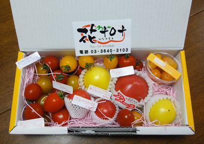 20120820_tomatoes2.jpg
