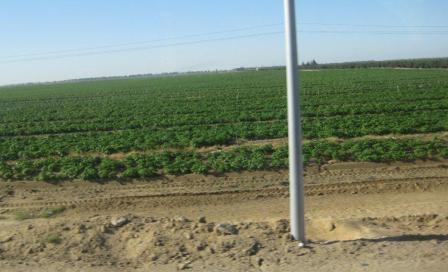 101229_plantation.jpg