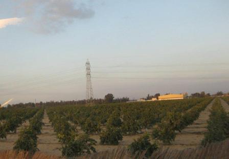 101229_plantation3.jpg